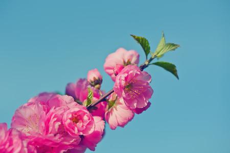 tender tenderness: Sakura. Spring is coming.