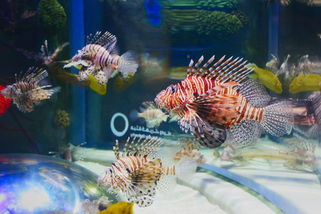 live coral: Tropical fish in sea.