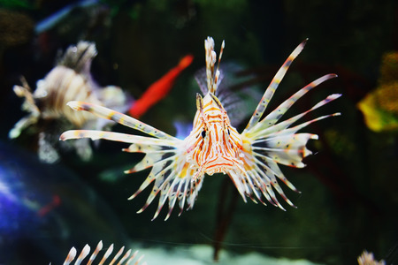 live coral: Funny tropical fish in sea.