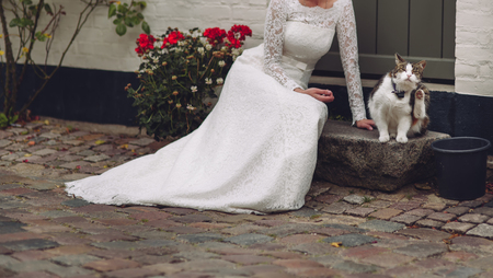 beautiful young bride in stylish wedding dress sitting next to a cat Stock Photo