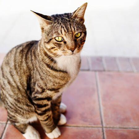 Big cat posing at street.