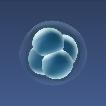 developmental biology: In vitro fertilization IVF . Embrio development. 4-stage cell. Illustration for web or typography magazine, brochure, flyer, poster. Illustration