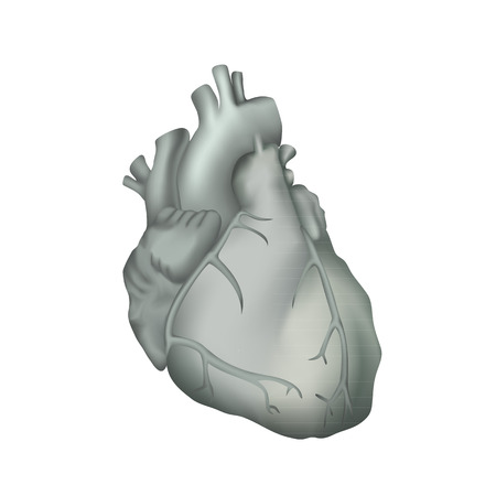 Human heart. Anatomy illustration. Gray image, white background
