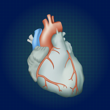 Human heart. Anatomy illustration. Colorful image, dark blue science background