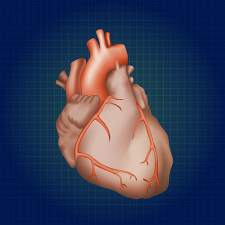 Human heart. Anatomy illustration. Red image, dark blue science background