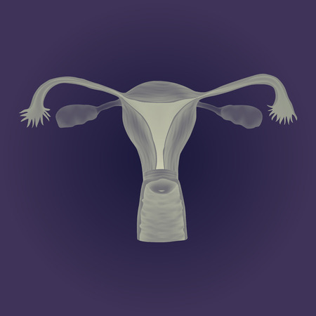 reproduce: Human realistic uterus. Anatomy illustration. Gray image, blue background