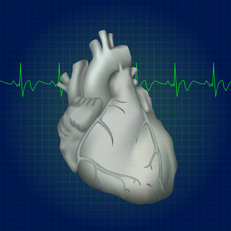 Human heart. Anatomy illustration. Gray image, dark blue science background. Heartbeat Illustration