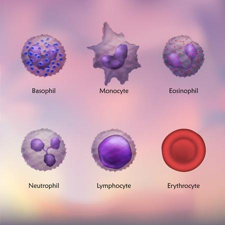 Leukocytes. Lymphocyte. Neutrophil. Eosinophil. Monocyte. Basophil. Vector Illustration