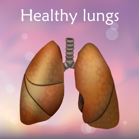 Human healthy lungs anatomy illustration. Pink background.