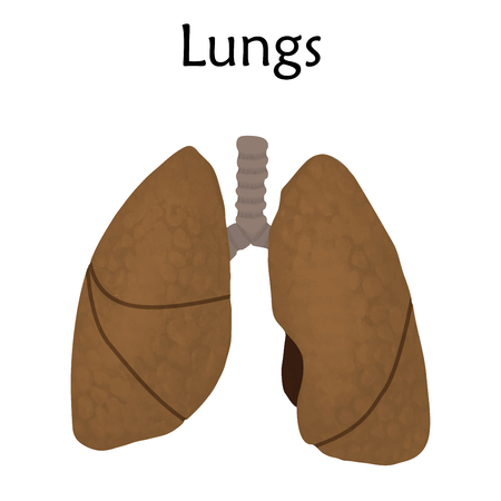 Human lungs. Anatomy flat vector illustration. White background.