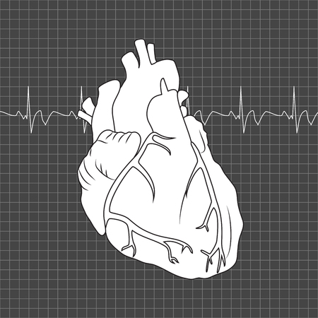 Human heart. Anatomy flat illustration. Outline image, dark gray science background. Heartbeat.