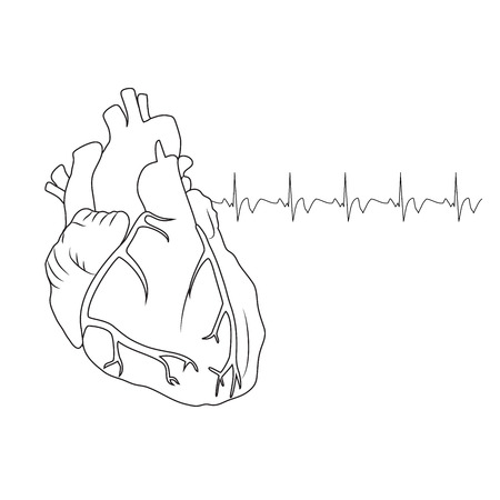 Human heart. Anatomy flat illustration. Outline image, white background. Heartbeat, pulse.