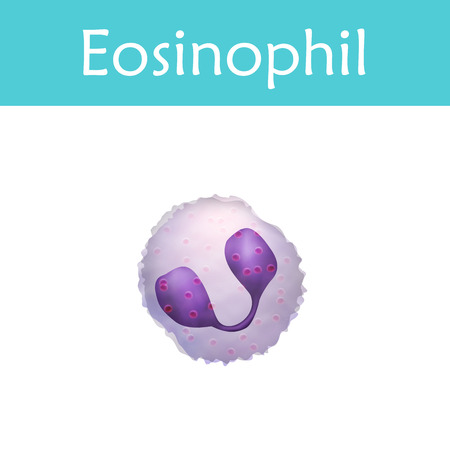 Eosinophil. Leukocytes. White blood cell. Vector medical illustration