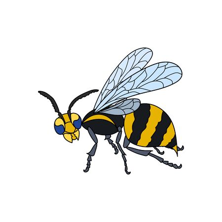 Lineart wasp. Outlined, black and white. Vector nature illustration.