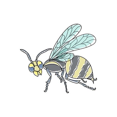 Wasp. Colored, painted, black outlined. Vector nature illustration. Ilustrace