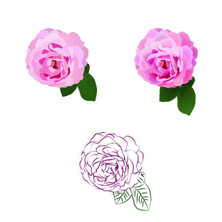 Set of isolated roses in realistic, flat, outline, line-art styles. Vector illustration. 向量圖像