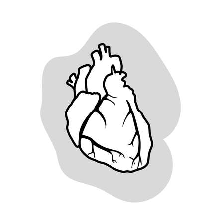 Human heart. Healthy. Medical outlined anatomy illustration.