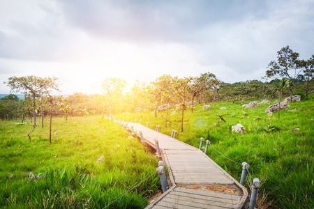 Walking way for meadow view in national park on sunset sky background