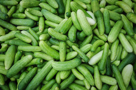 Group of green young cucumbers