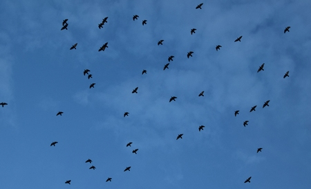 Birds in blue sky representing their freedom as whole world is a nation for them. Stock Photo