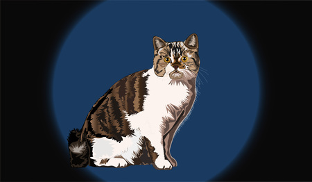 Cat illustration vector design.Easy to change the background.