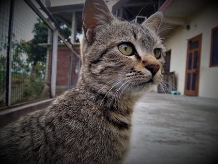 A cat looking something surprisingly Фото со стока