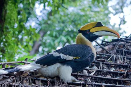 hornbill: Hornbill.