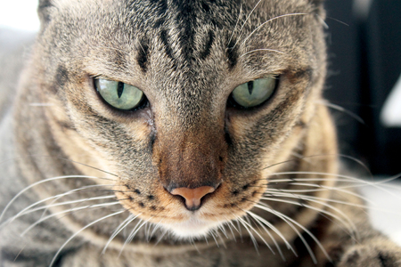close up on direct face of a tabby cat