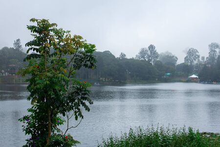 Scenic view of a tree and Yercaud Lake in background which is one of the largest lakes in Tamil Nadu. India Banco de Imagens