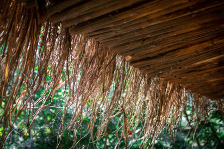 Straws hanging out of a thatched roof with beautiful green background