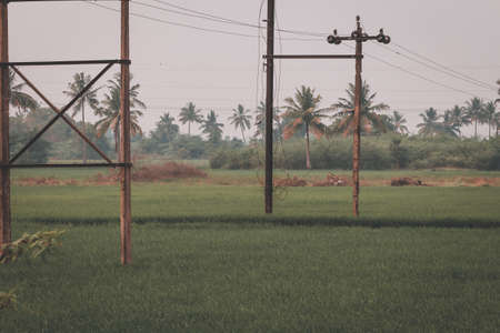 Beautiful view of vast rice fields in rural area, Tamil Nadu, India. View of paddy fields. Reklamní fotografie