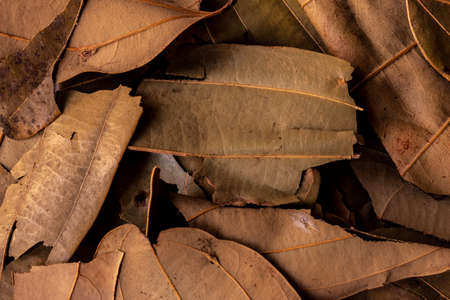 Indian bay leaves which are common ingredient used in cooking for their distinctive flavor and fragrance Reklamní fotografie