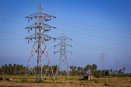 View of electricity pylon along the paddy fields, tamil nadu, India