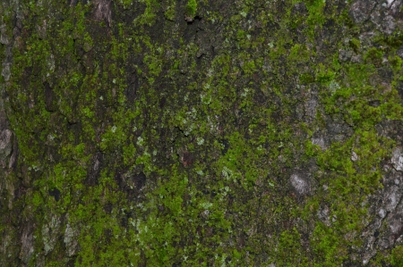 ligne: texture oak Stock Photo