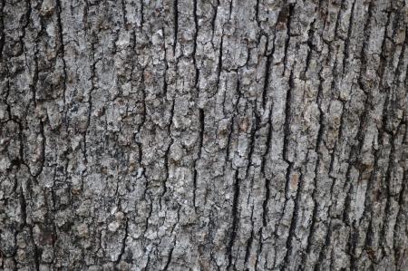 ligne: texture bark oak