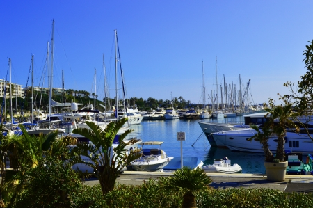 harbour  Canto  in Cannes