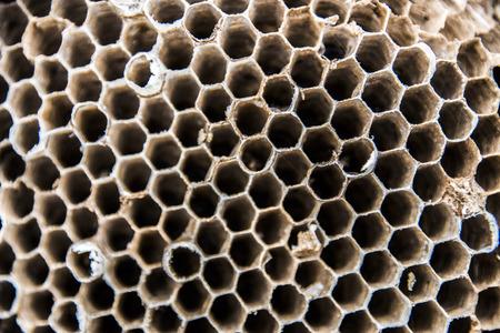 alveolos: Alvéolos nido Hornet