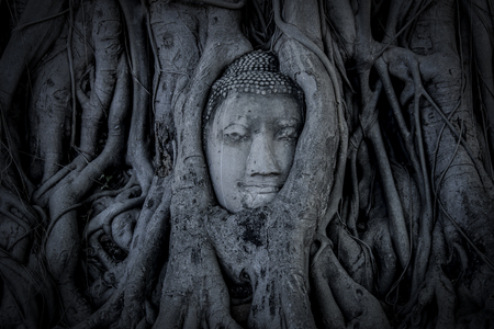 cabeza de buda: la cabeza de Buda en Ayutthaya