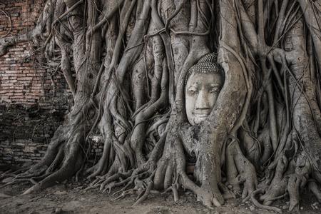 cabeza de buda: Buddha head in Ayutthaya Foto de archivo