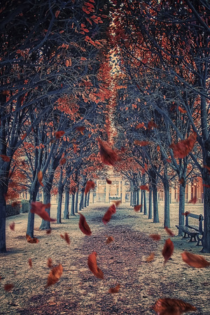 Leaves falling in the park in Paris Foto de archivo