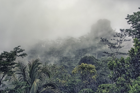 Deep rainforest in Java Indonesia 写真素材
