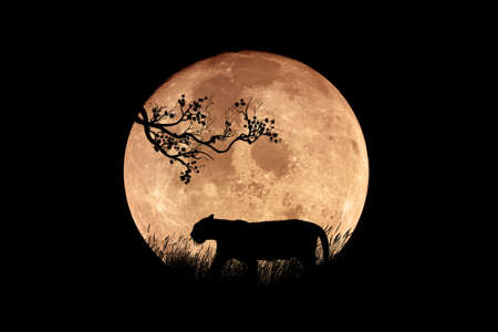 Illustration of a tiger silhouette in the night