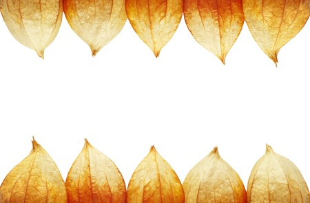 frame of Physalis on a reddish background Stock Photo