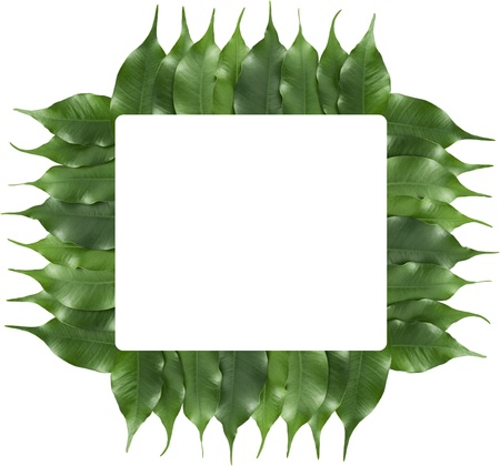 ficus leaf frame with roudend rectagle in the middle for  text