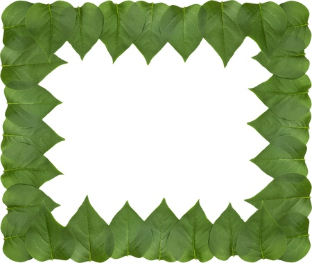 Lilac leaf frame Stock Photo