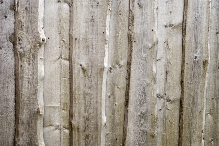 wood texture of barn wall photo