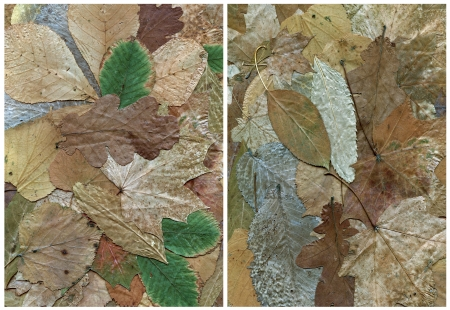 green brown backgrounds of dry different kind of leaf Stock Photo
