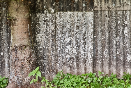 Roof Tiles, Lichen and Moss, Wavy Surface Stock Photo - 16719802