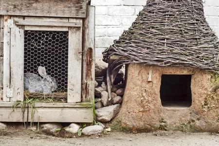 rabbit cage: coniglio in gabbia vicino alla cuccia del cane