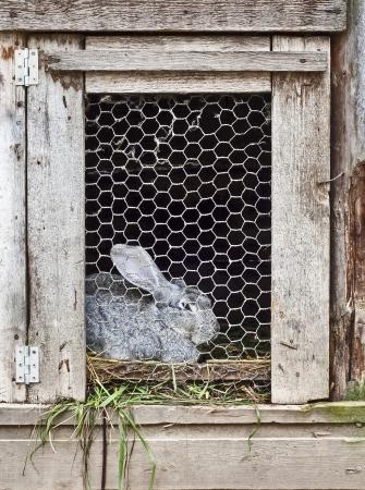 lapin dans la cage